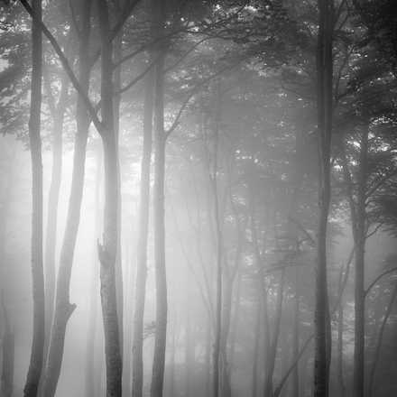 Beech Tree Forest, Pyrenees, Study 1 - Jonathan Chritchley