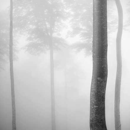 Beech Tree Forest, Pyrenees, Study 2 - Jonathan Chritchley