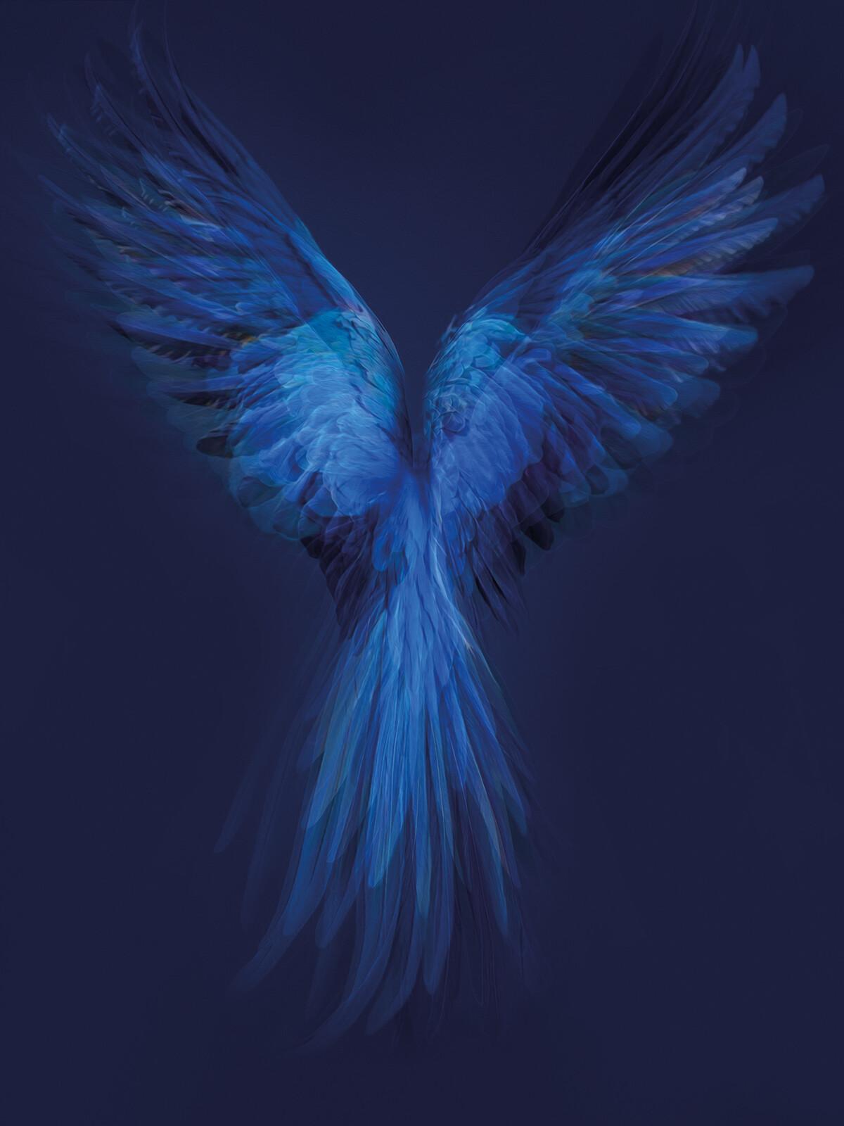 Hyacinth Macaw - Juan Fortes