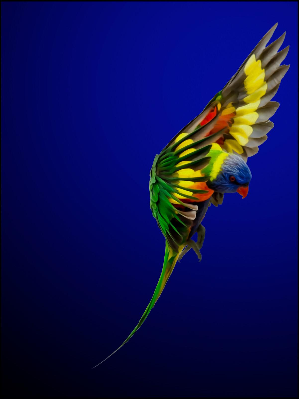 Rainbow Lorikeet - Juan Fortes