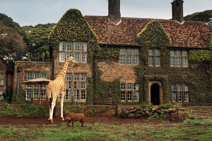 Giraffe Manor #9 von Klaus Thymann