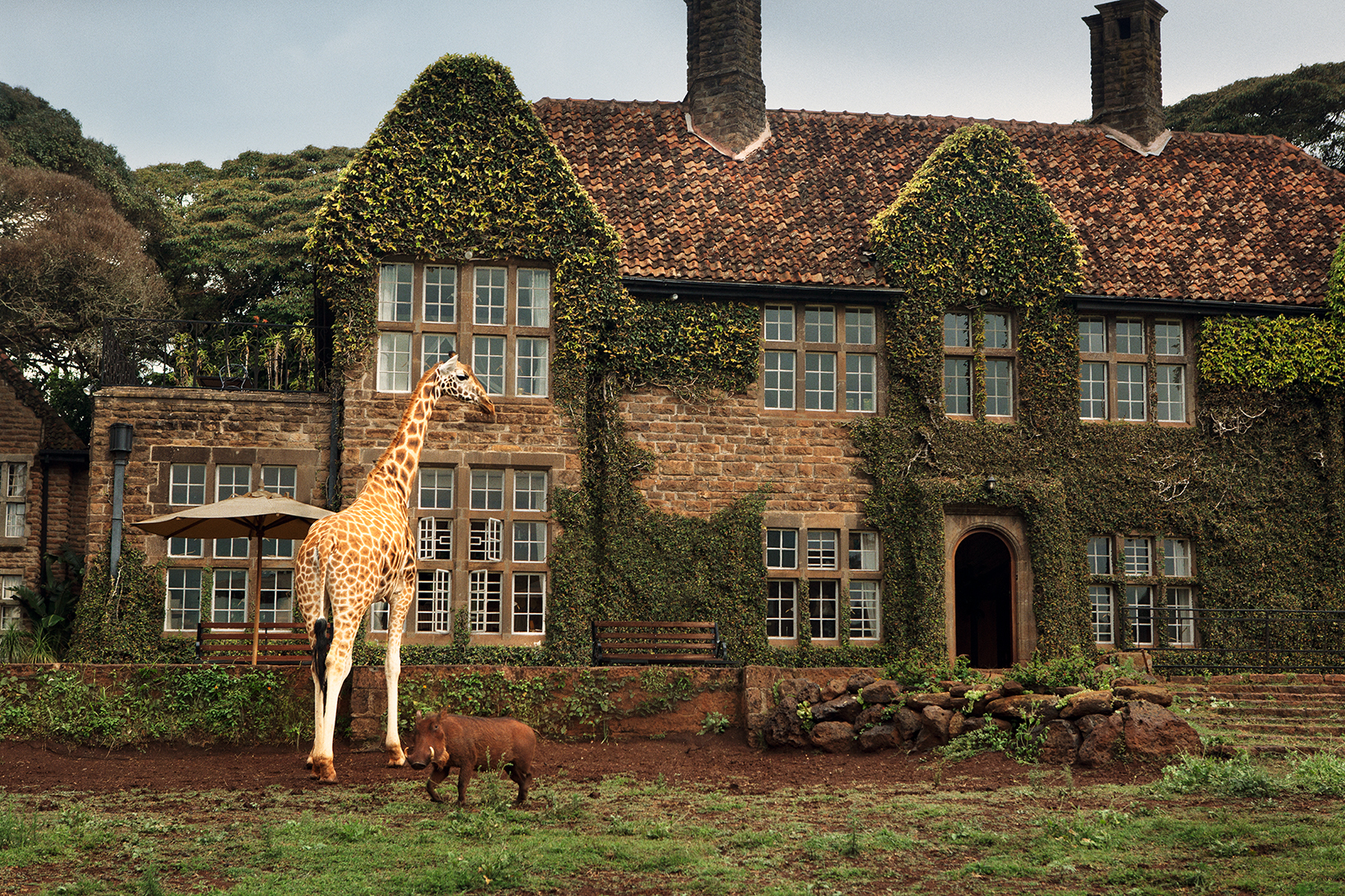 Giraffe Manor #9 by Klaus Thymann