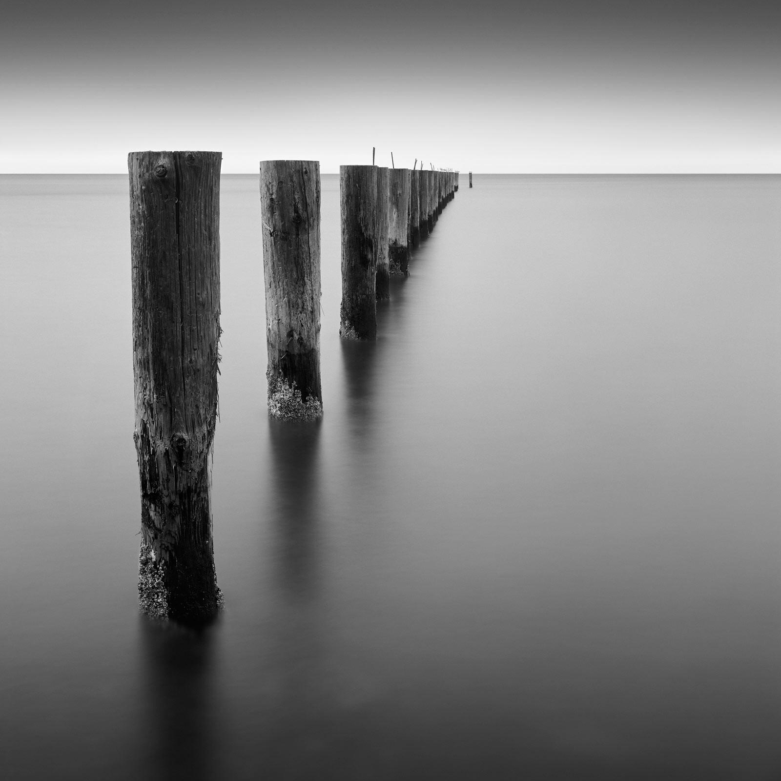 Seven Birds - Michael Levin