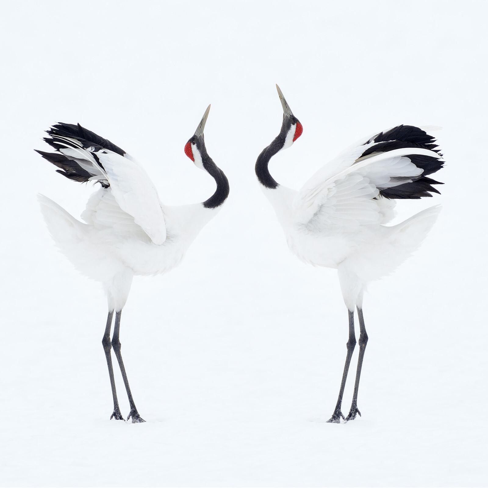 Beauty Through Order - Marsel Van Oosten