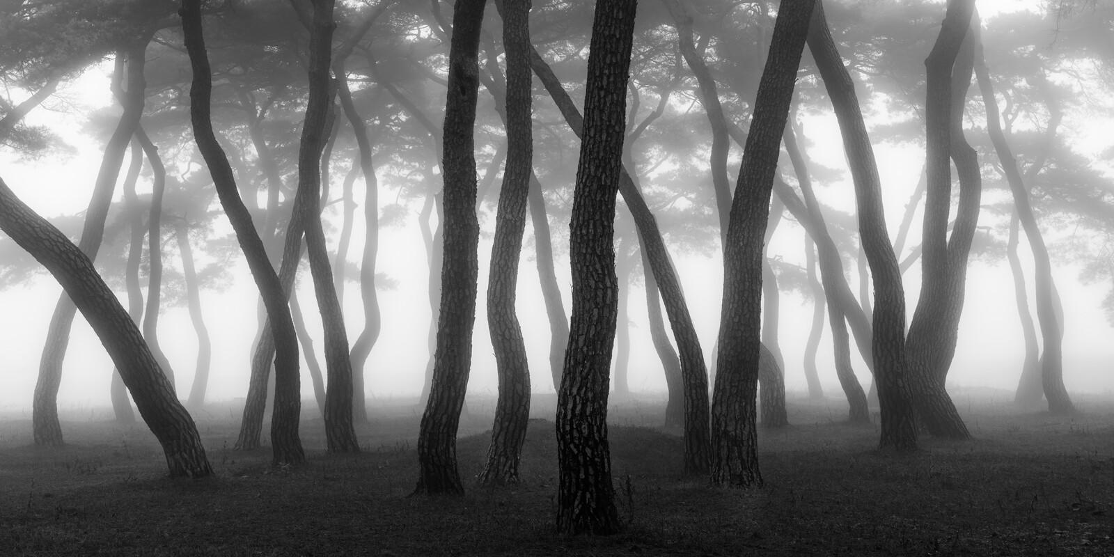 Pine Forest III - Nathaniel Merz