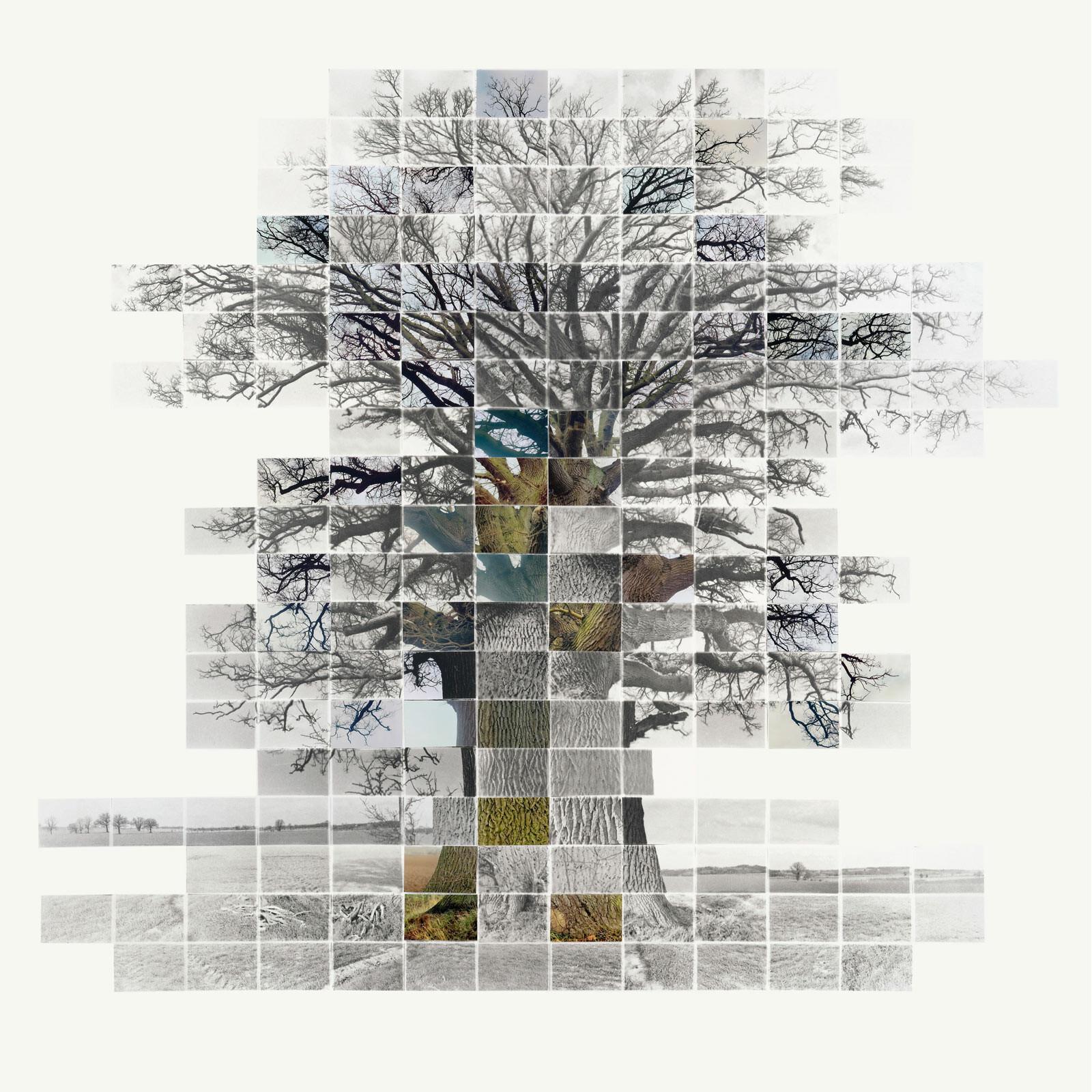 Still Film of an Oak at Wormingford No 7 - Noel Myles