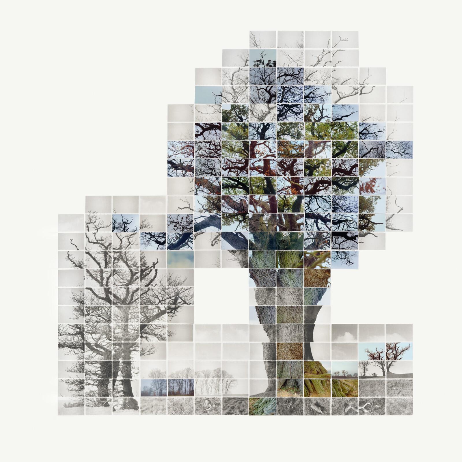 Third Film of the three trees, No 1 - Noel Myles