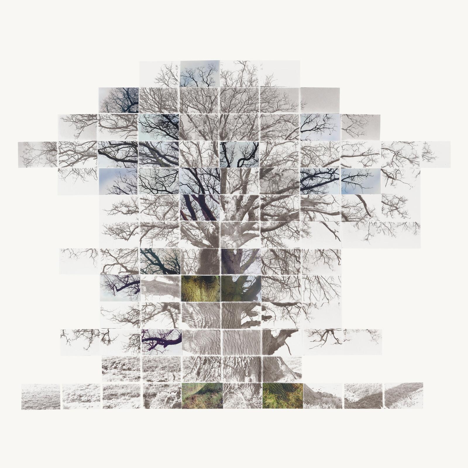 Sketch Film of a Tree - Noel Myles