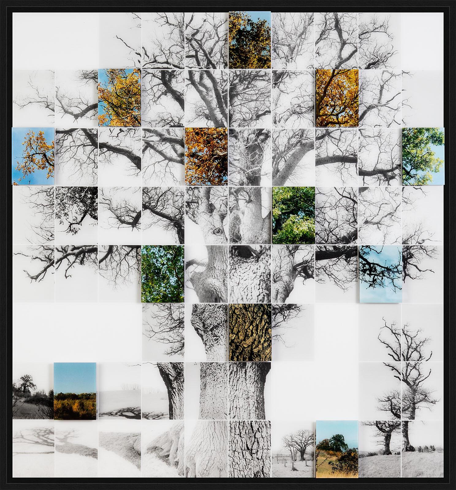 Oak No 1 - Noel Myles