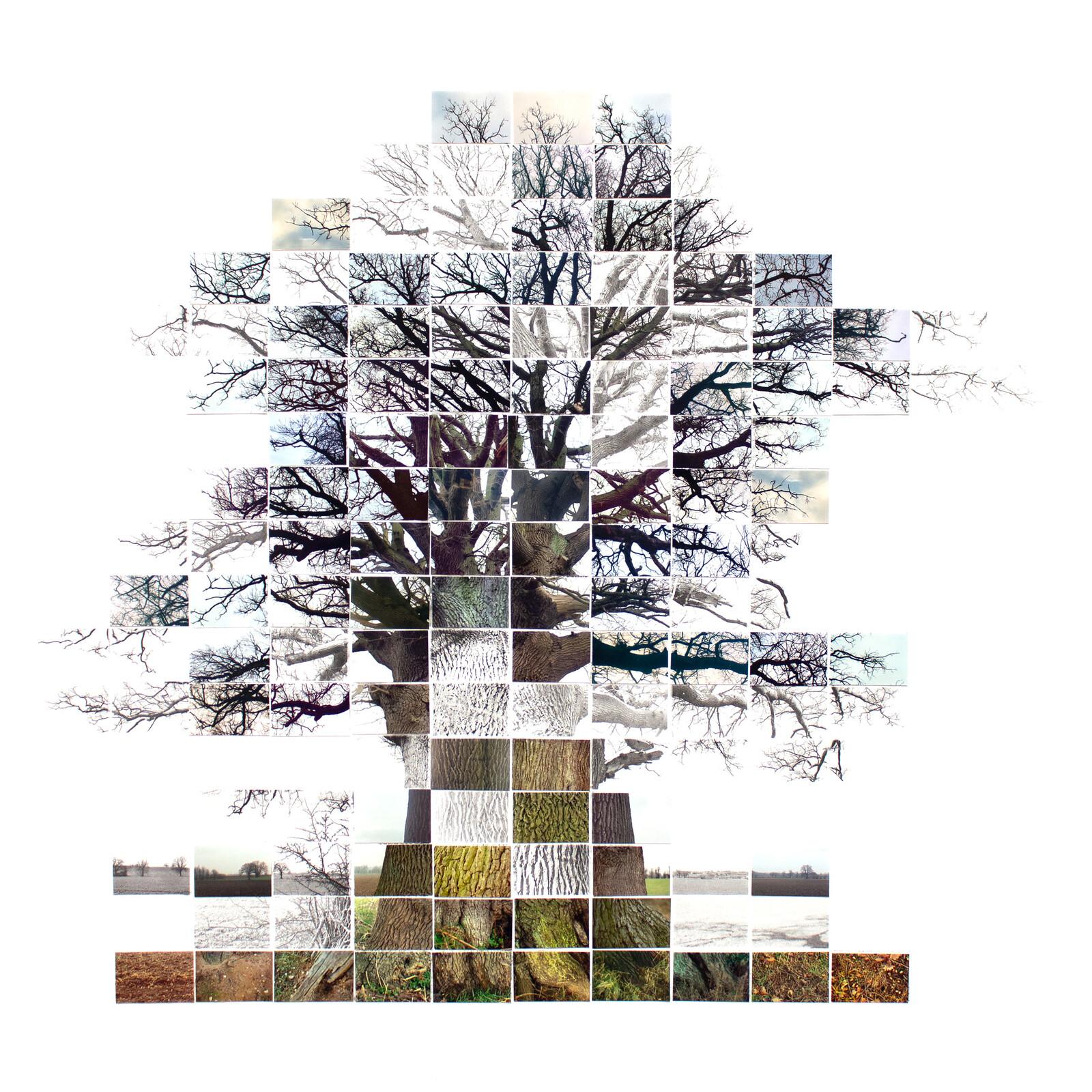 Still Film of an Oak Tree near Sudbury - Noel Myles