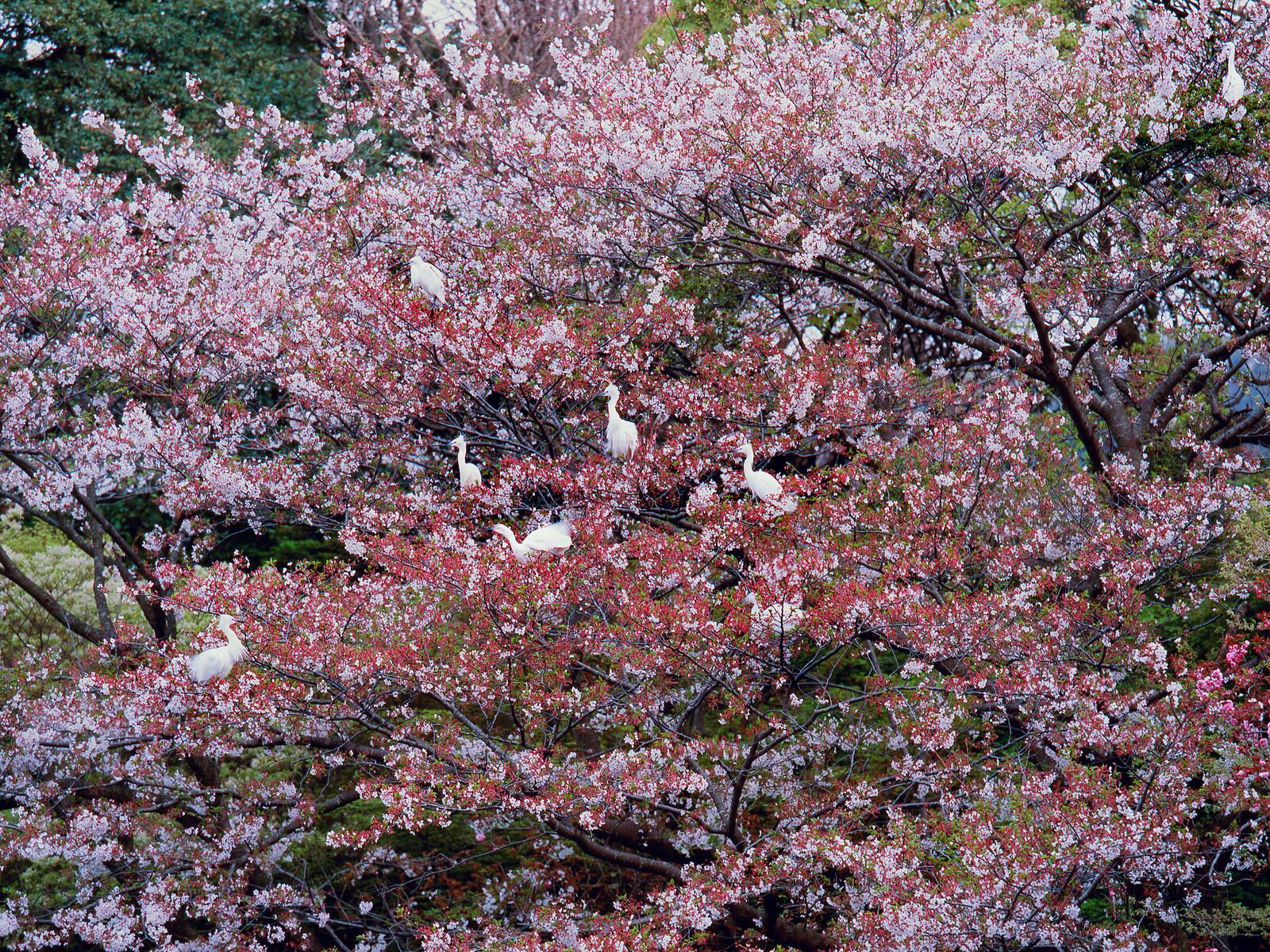 Kamakura - Olivier Föllmi