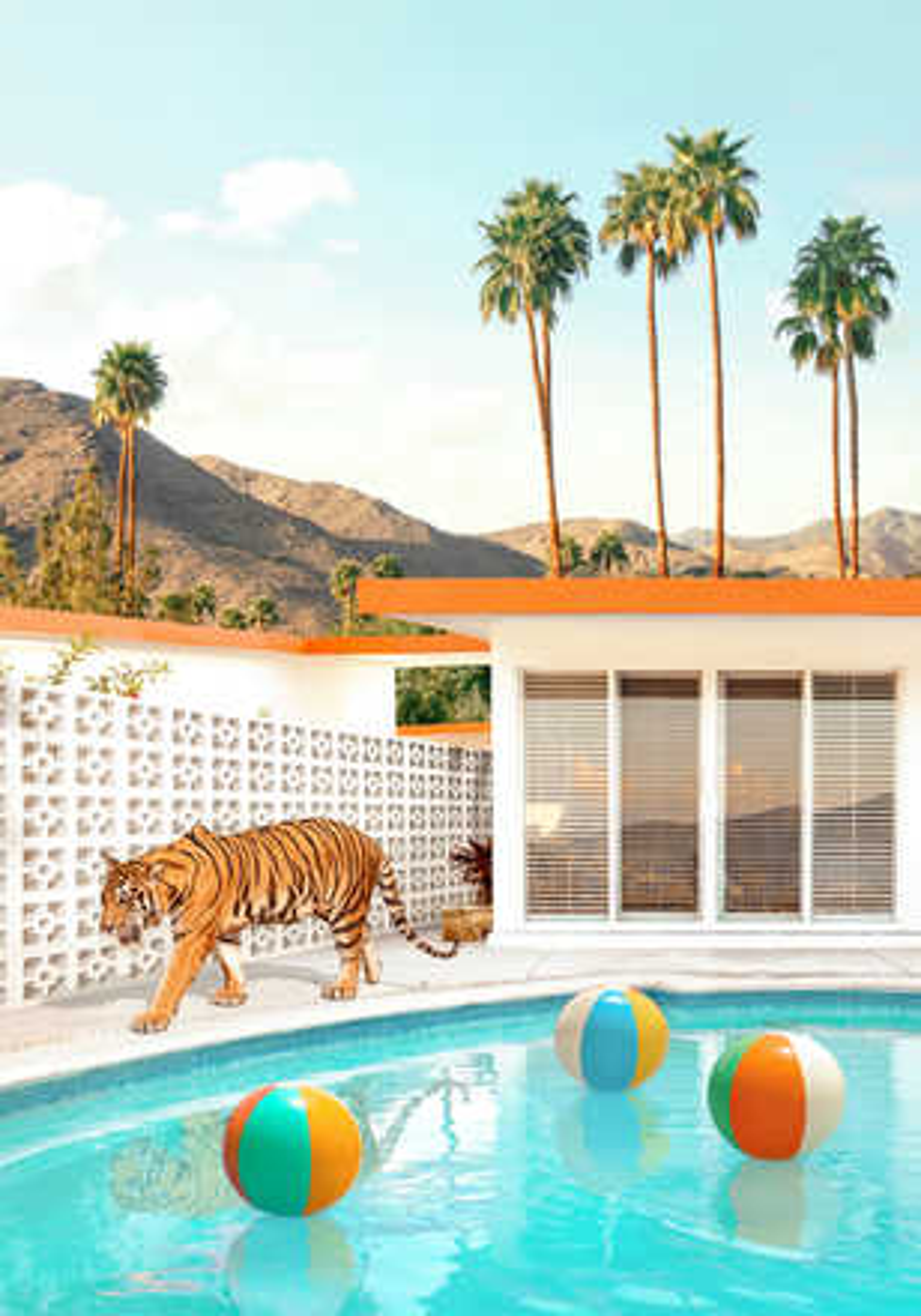 Pool Desert Tiger - Paul Fuentes