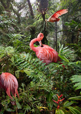 Two Lost Flamingos and a Spoonbill     von Pat Swain
