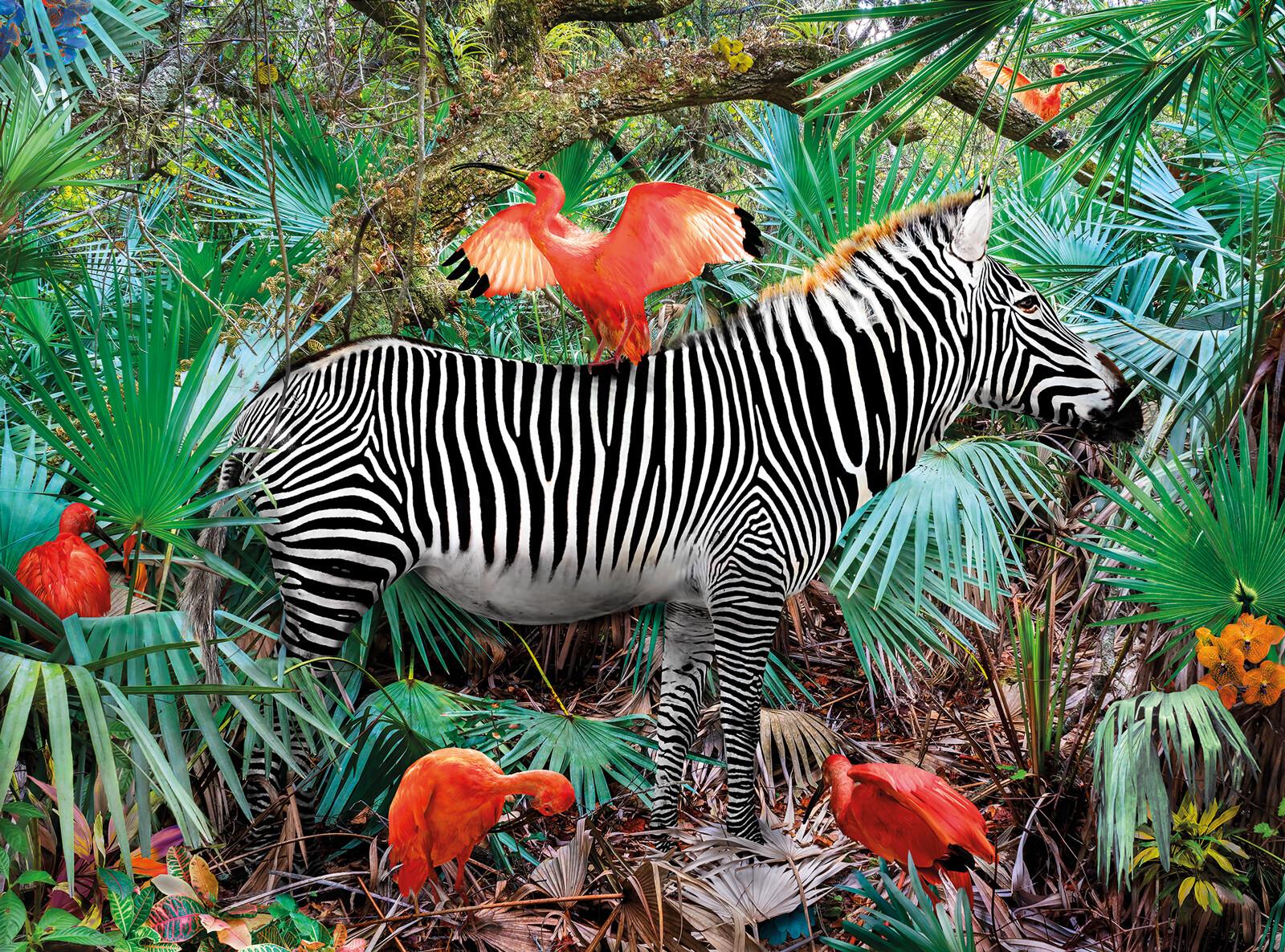 Ibises & Zebra - Pat Swain
