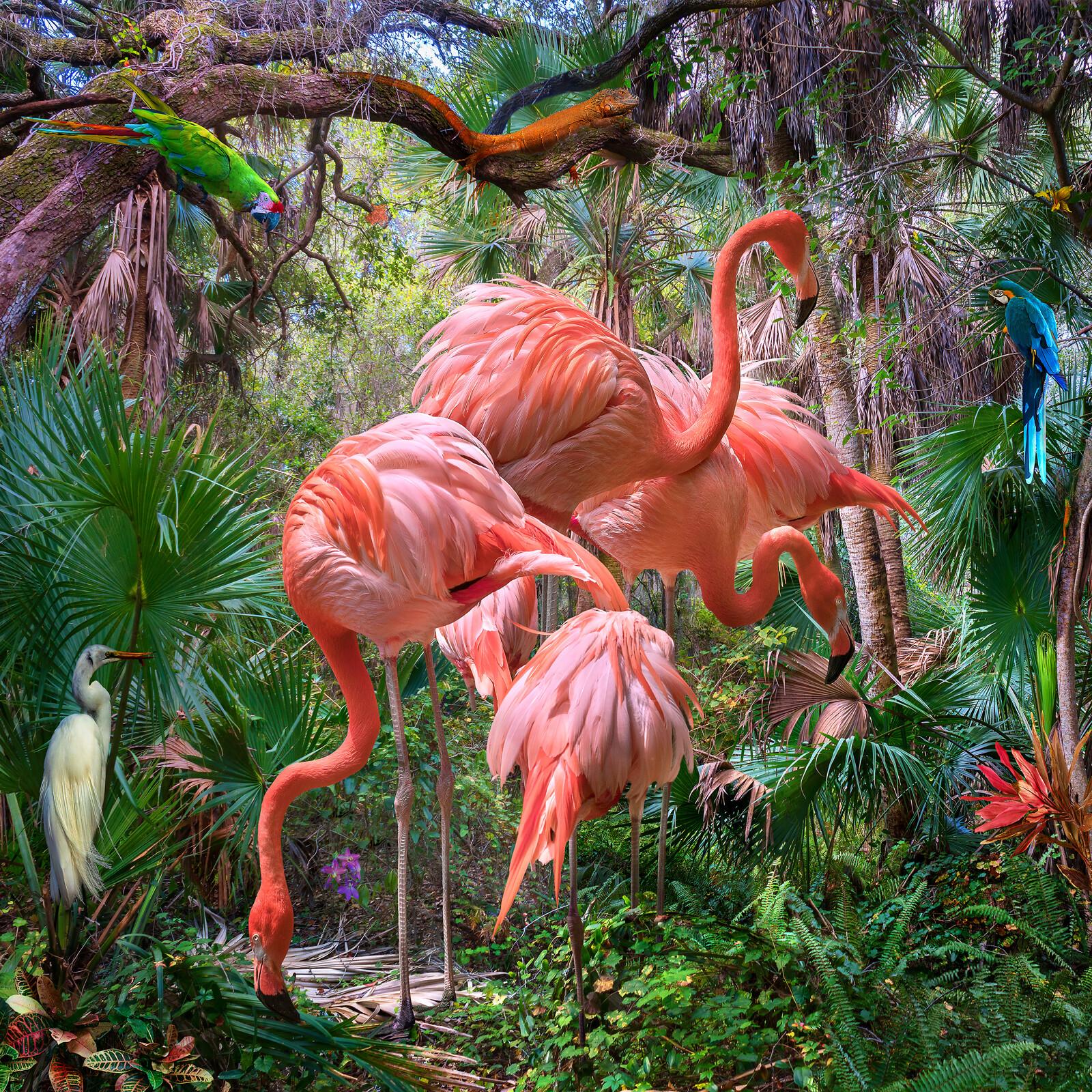 Lost Flamingos and Some Acquaintances - Pat Swain
