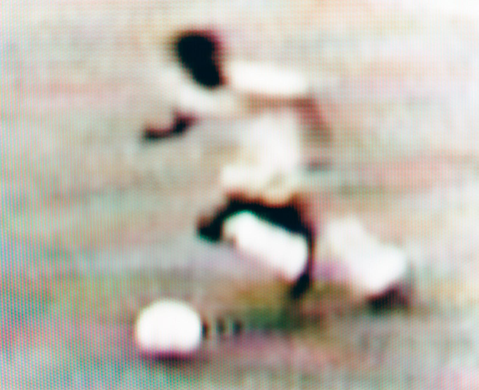 Pele v Bulgaria Brazil v Bulgaria, 2-0 (Group stage) 12.06.1966 Goodison Park, Liverpool, England - Robert Davies