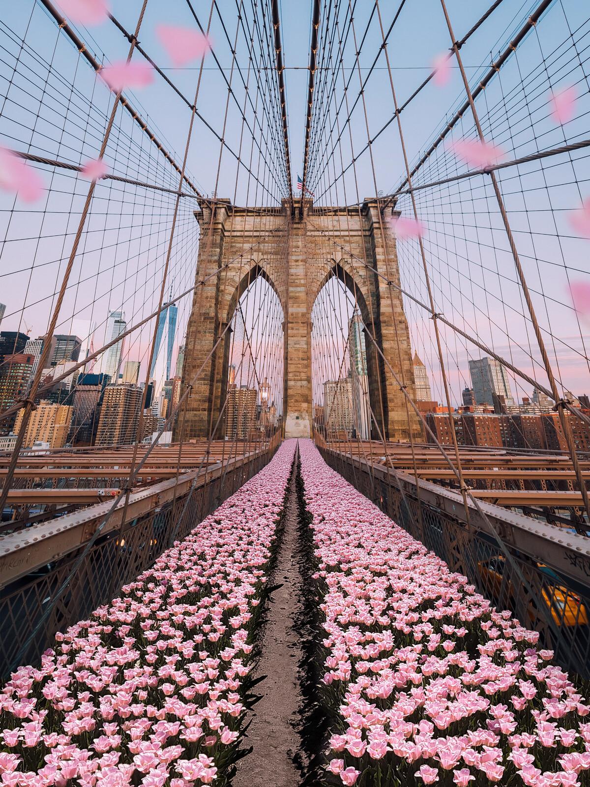 Brooklyn Bridge Tulips - Robert Jahns