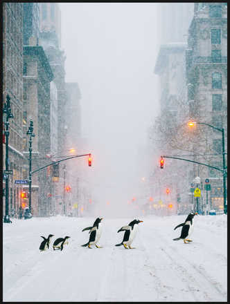 NYC Penguins - Robert Jahns