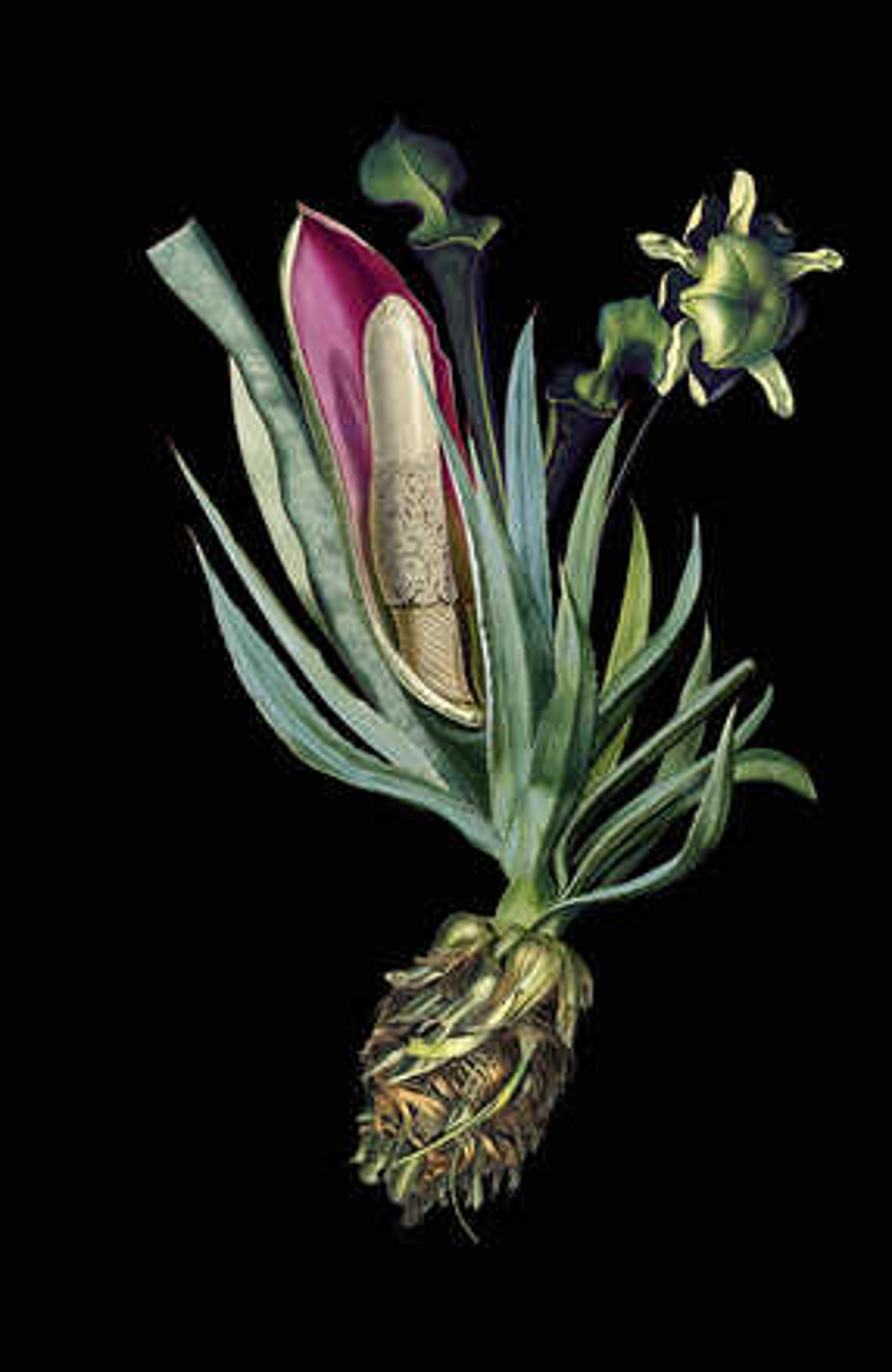 Aloedendron - Rive Roshan
