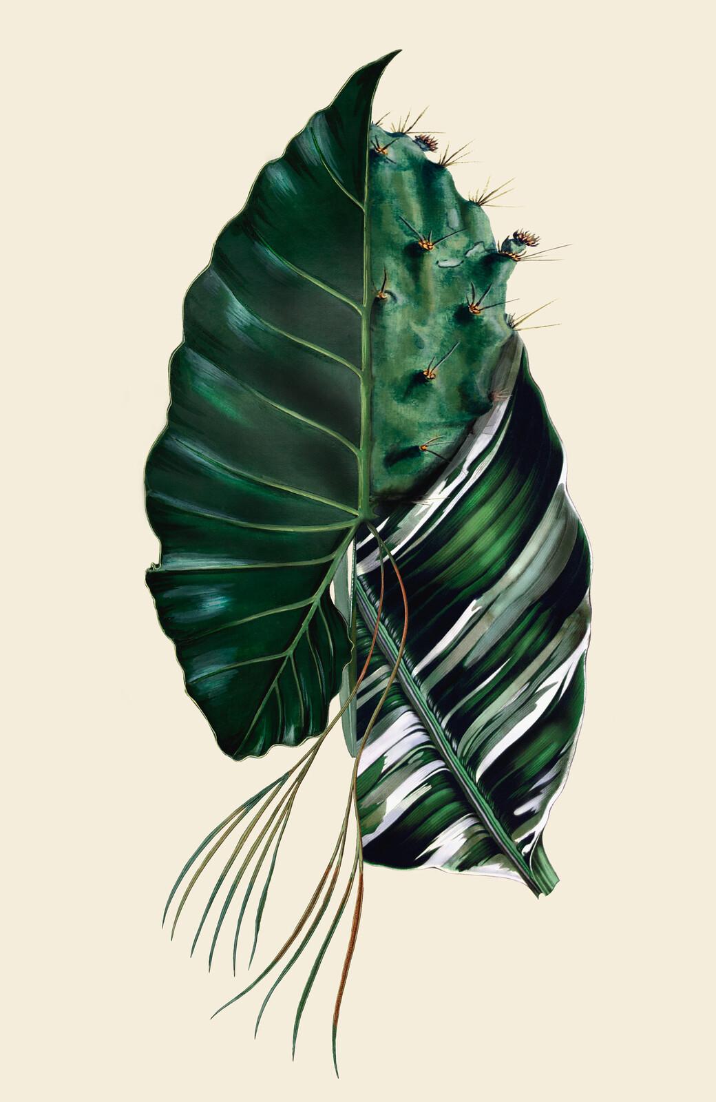 Philocactus - Rive Roshan