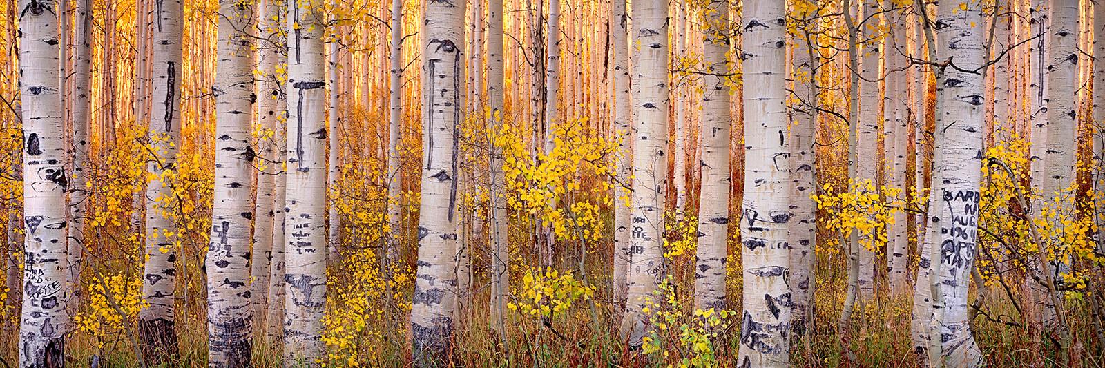 Forest Sunset - Steven Friedman