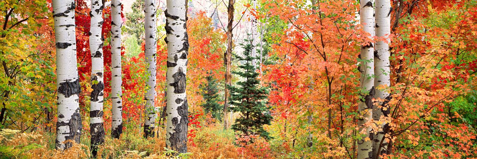 Autumn Sunlight - Steven Friedman