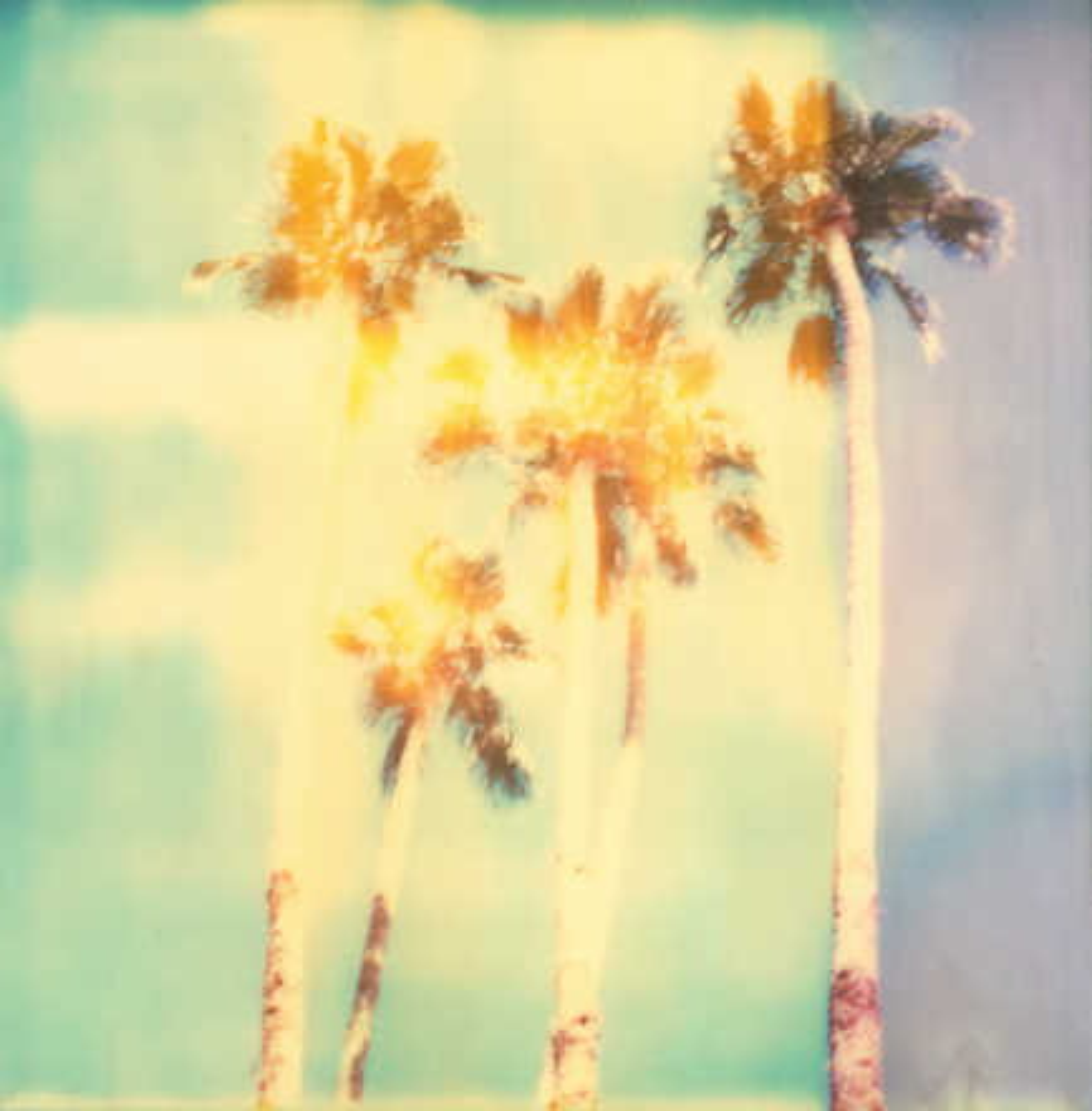 Palm Springs Palm Trees - Stefanie Schneider