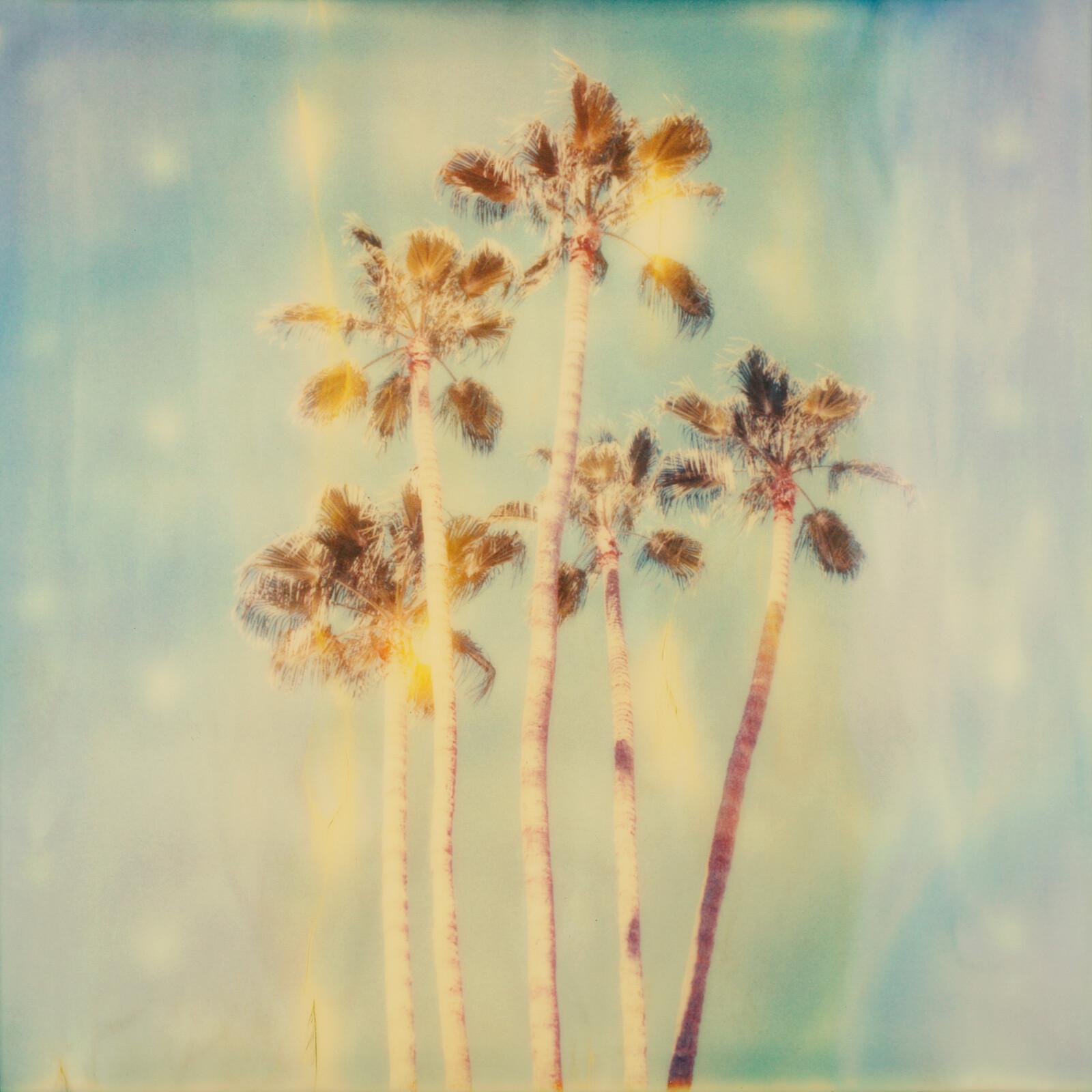 Palm trees palm springs - Stefanie Schneider