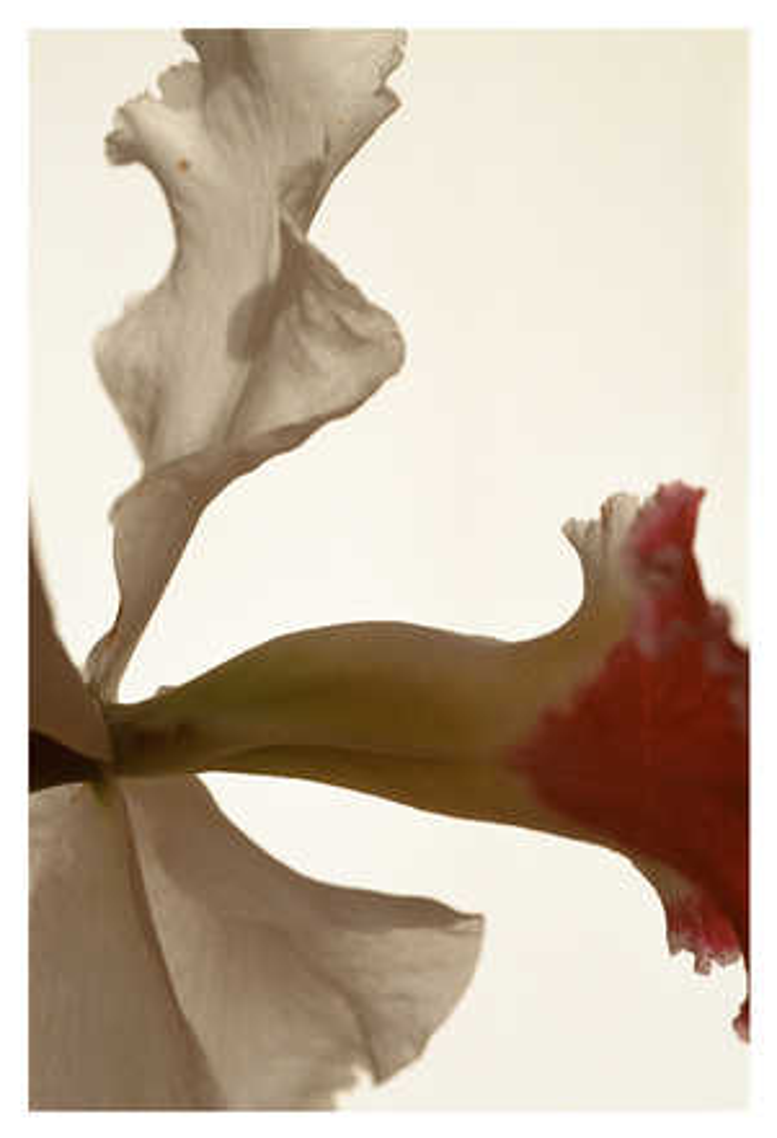 Blumenstück VI - Thomas Florschuetz