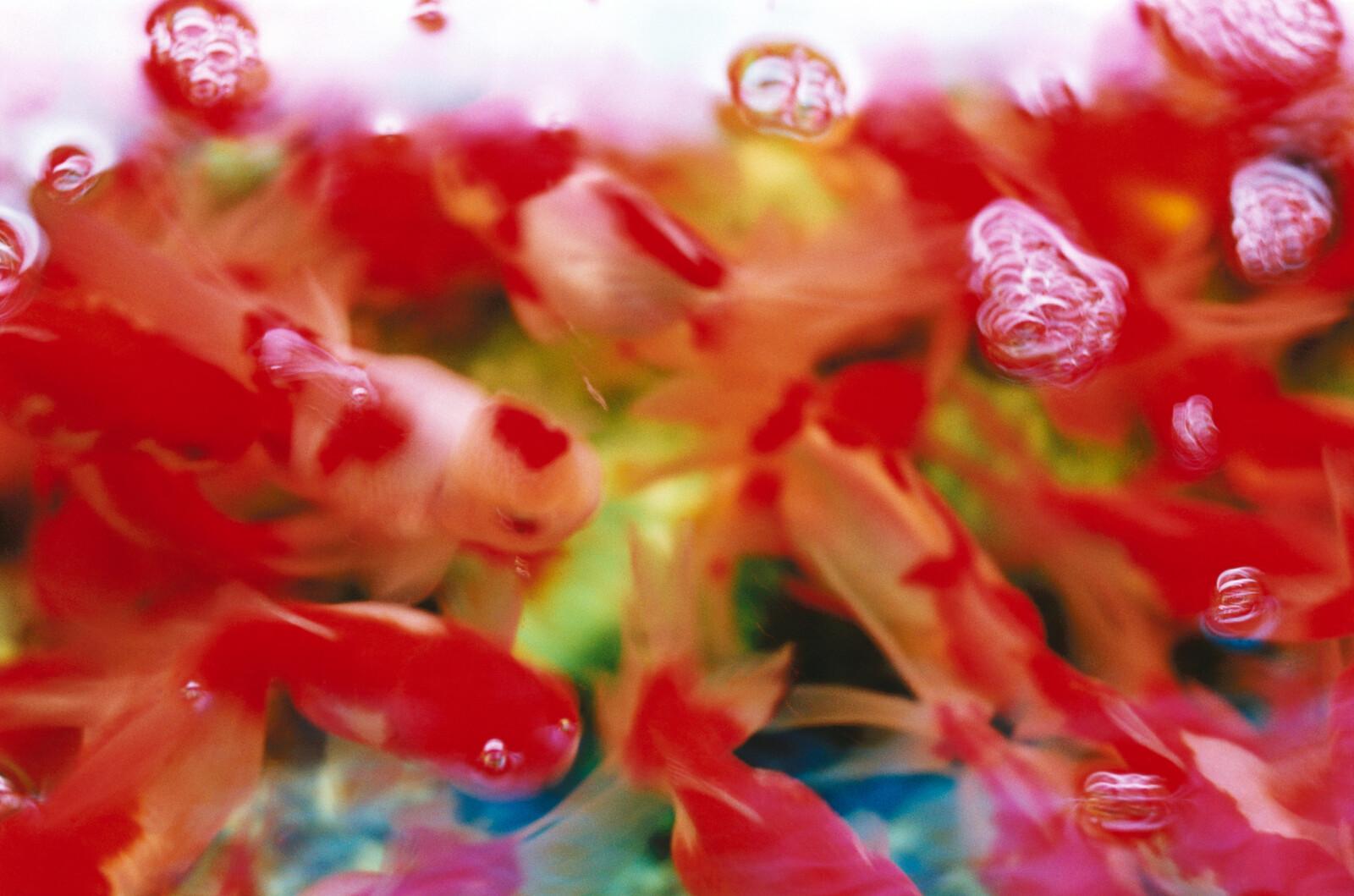 Untitled, Liquid Dreams 2 - Mika Ninagawa | Trunk Archive