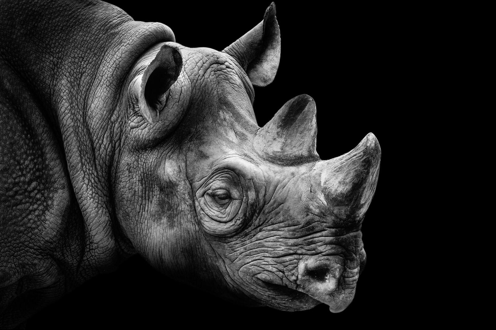 Rhino Portrait - Wolf Ademeit