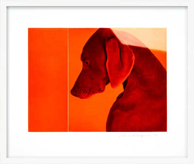 William of Orange de William Wegman