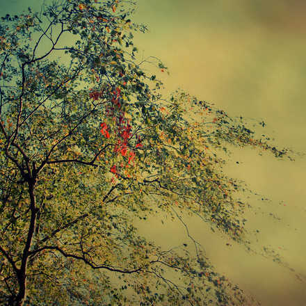 The Autumnal Whisper - Christiane Steinicke