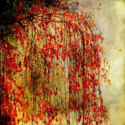 Tree on Fire - Christiane Steinicke