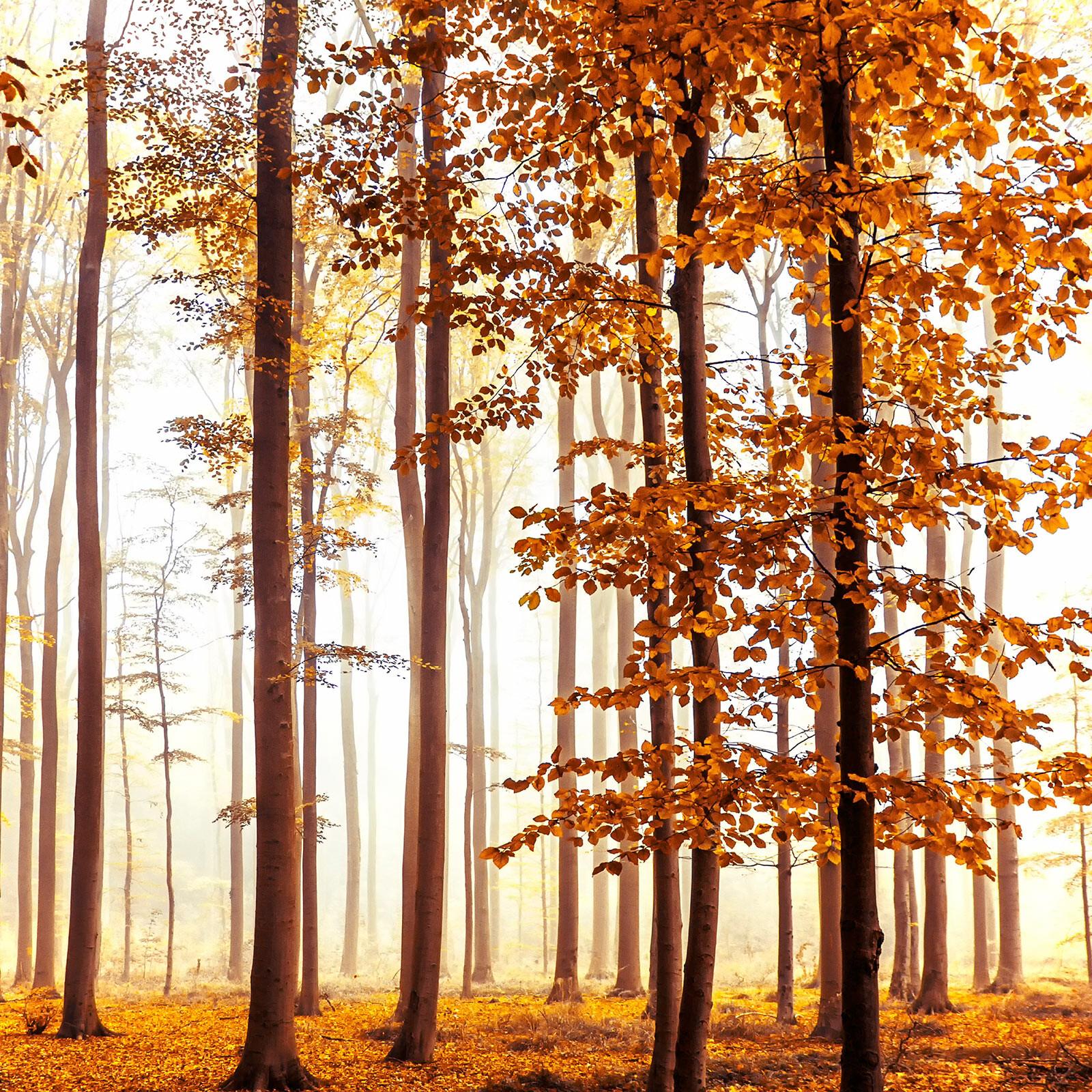Golden Light - Christiane Steinicke