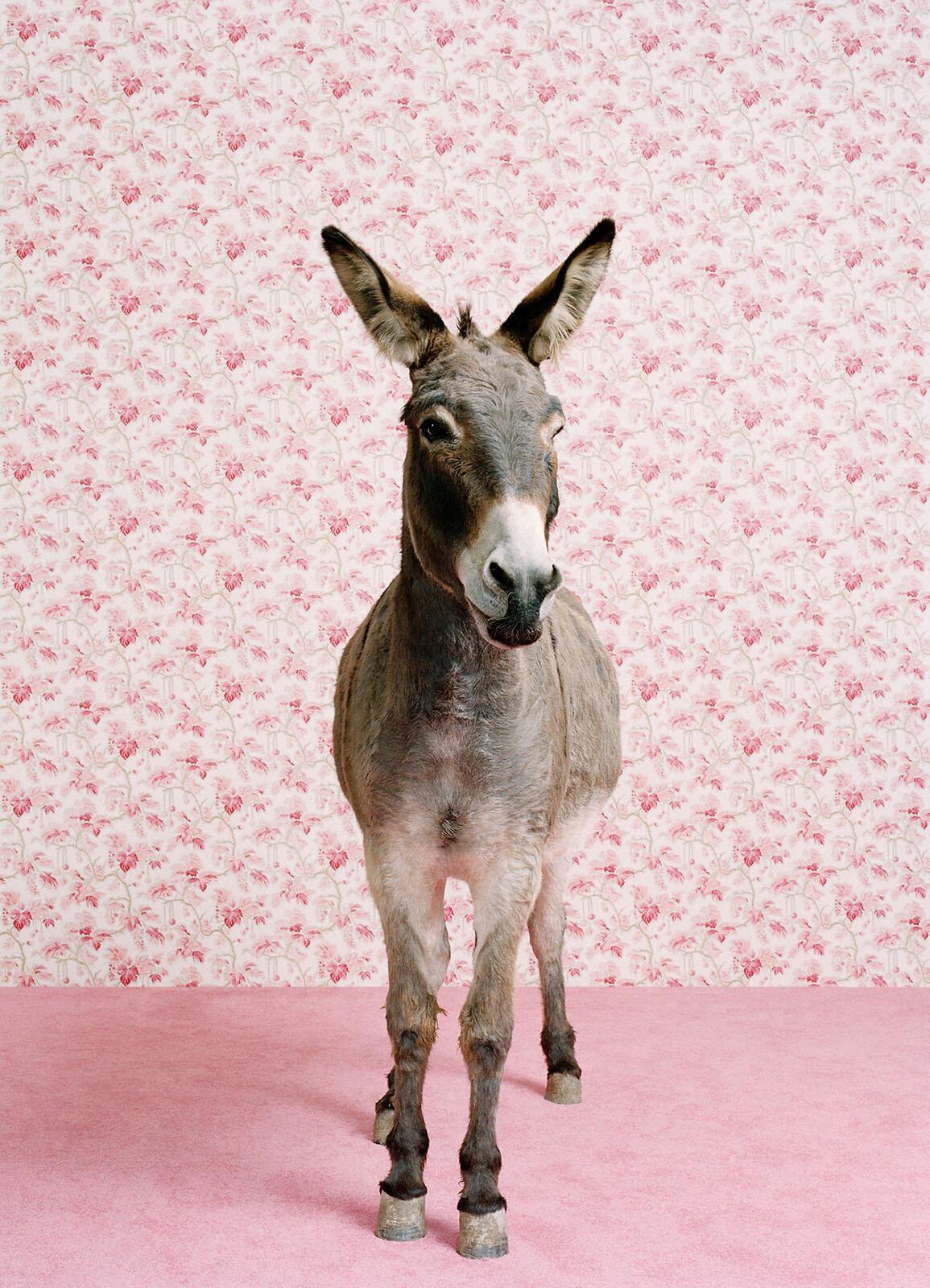 Donkey 2 - Catherine Ledner