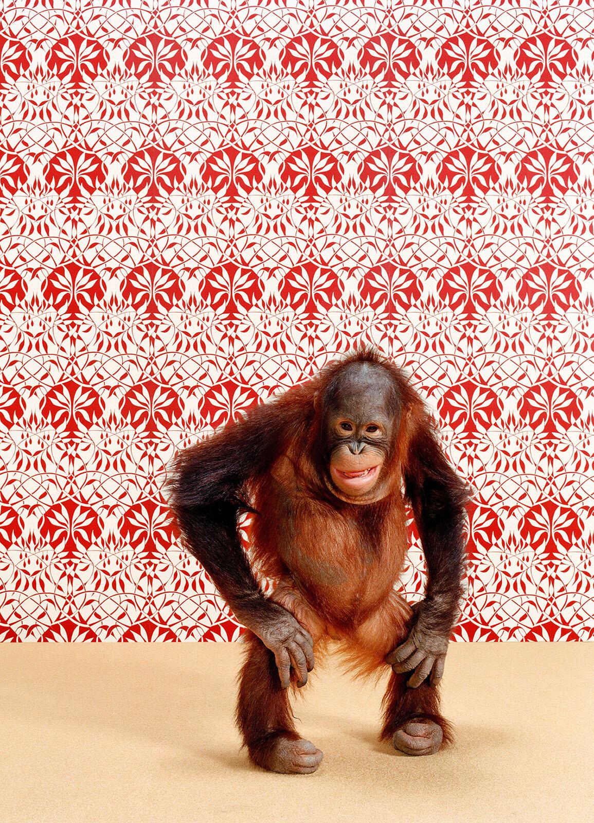 Orangutan 6 - Catherine Ledner