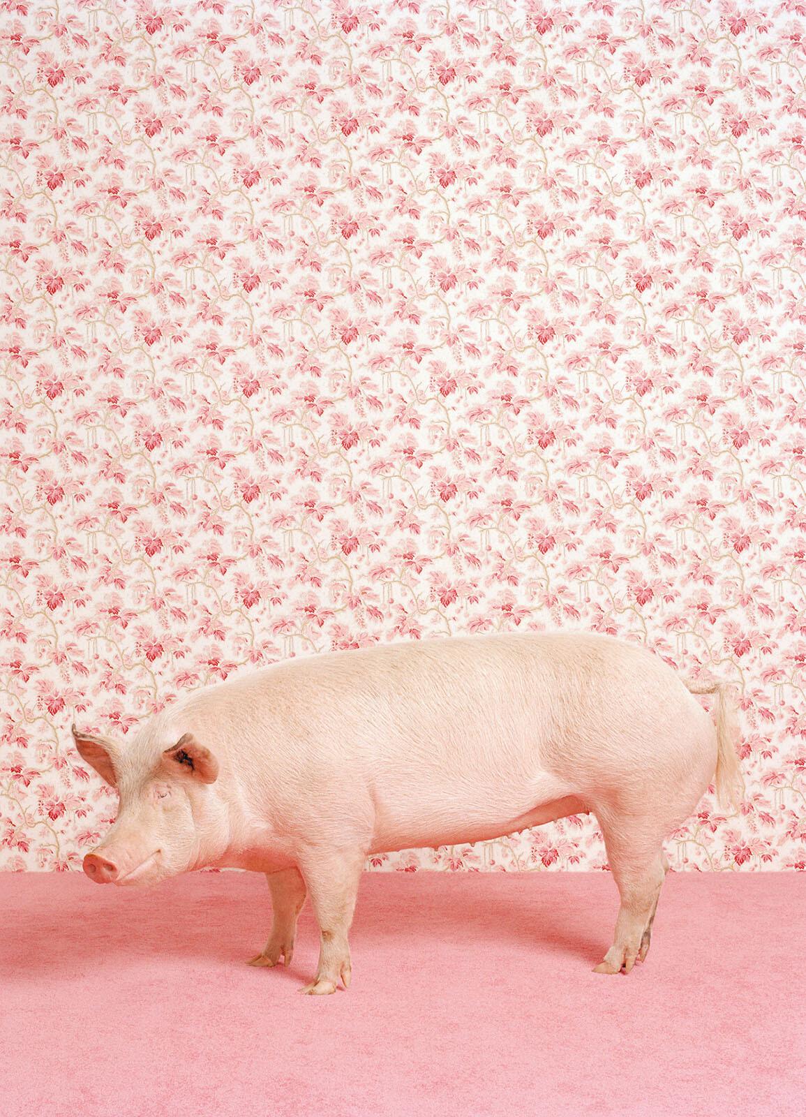 Pig 1 - Catherine Ledner