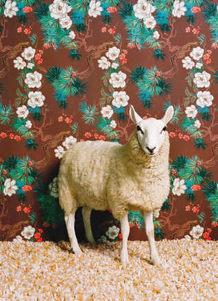 Sheep 1 - Catherine Ledner