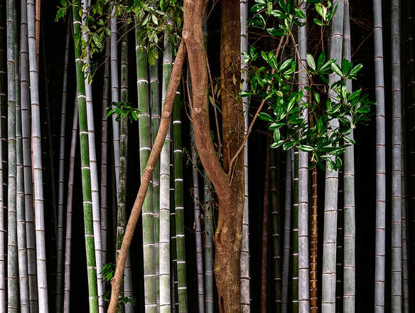 Bamboo I - André Wagner