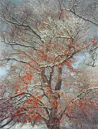 Early Snowfall - Barry Cawston