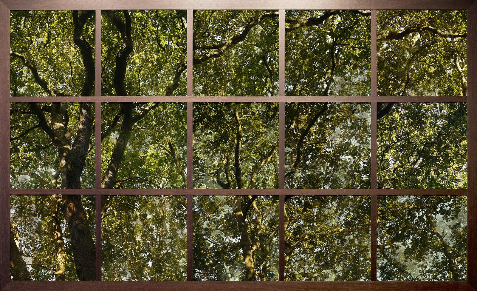 Treescape I - Christiane Zschommler