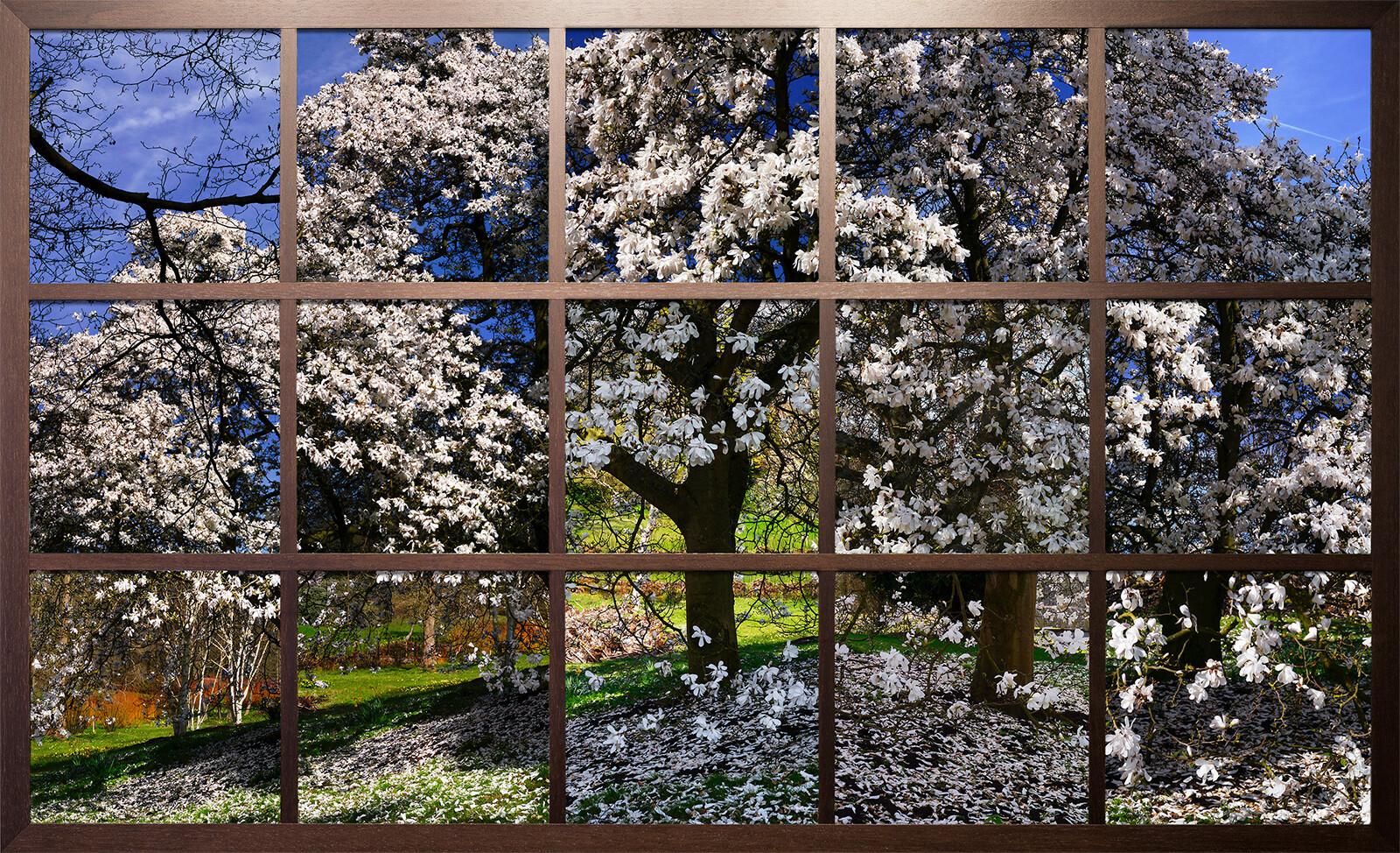 Blossom I - Christiane Zschommler