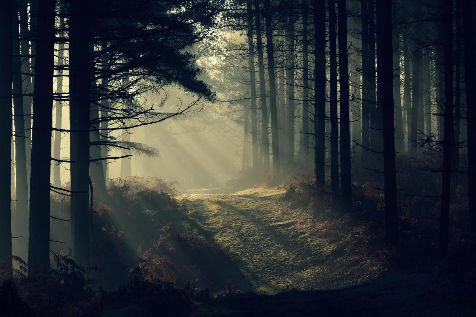 New Forest Dawn - David Baker