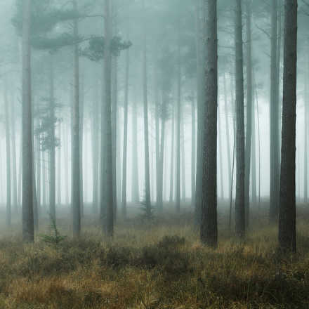 New Forest Mist - David Baker