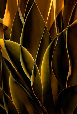 Cactus Abstraction 01 - Ed Freeman