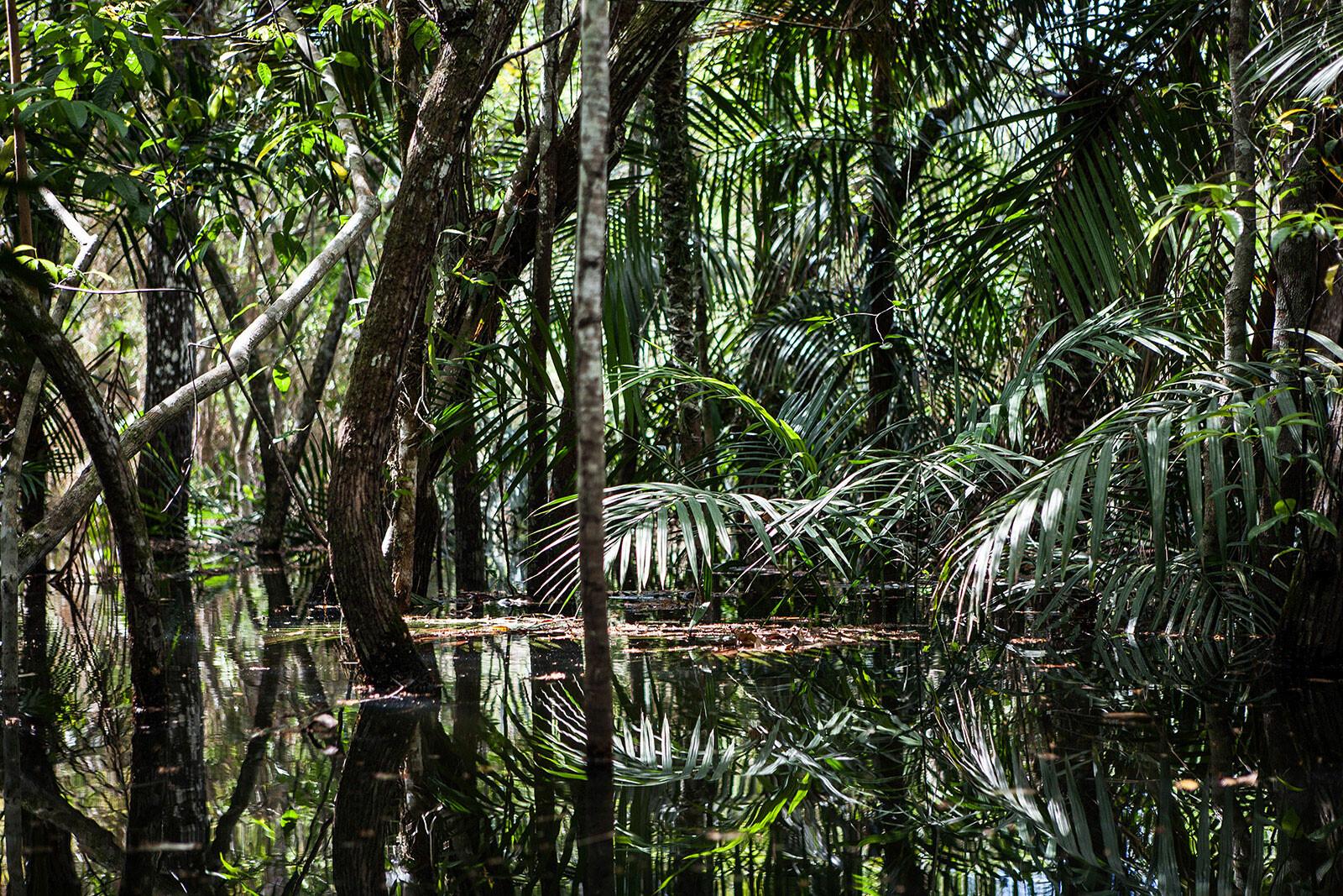 Amazon Forest 8 - Eduardo Marco