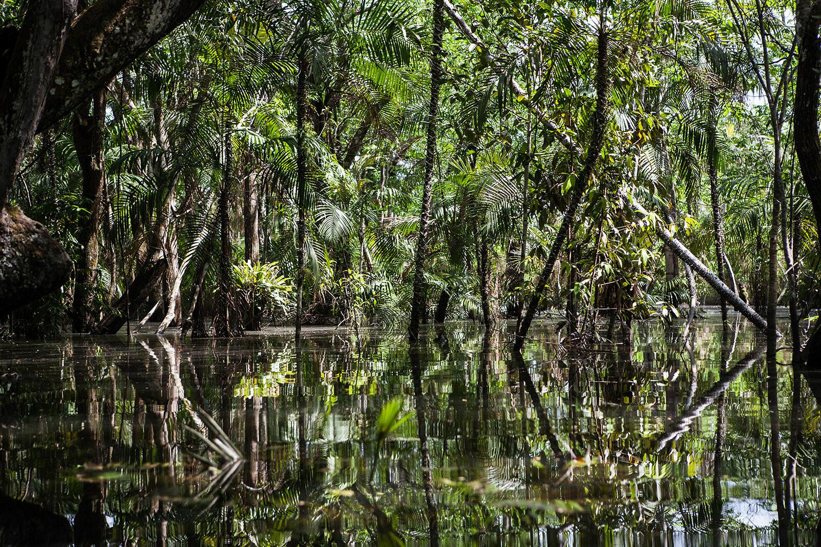 Amazon Forest 15 - Eduardo Marco