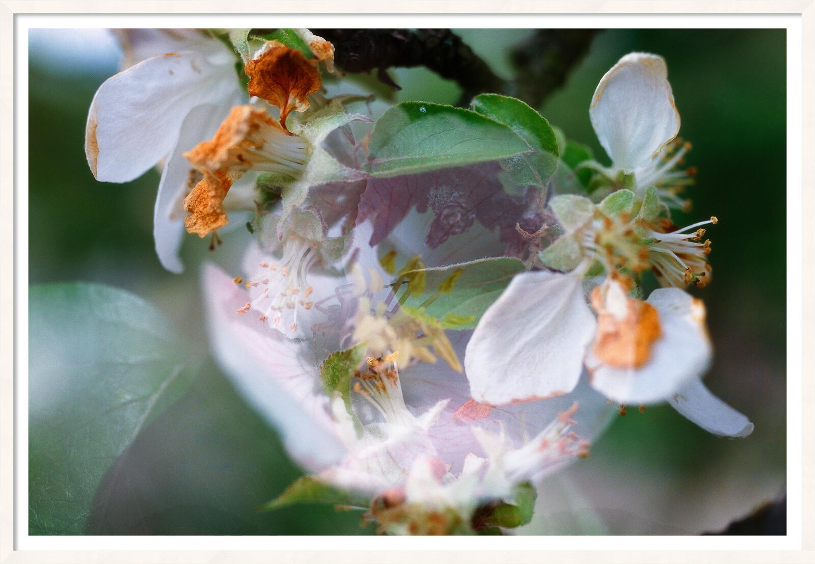 Blumen - Fischli Weiss