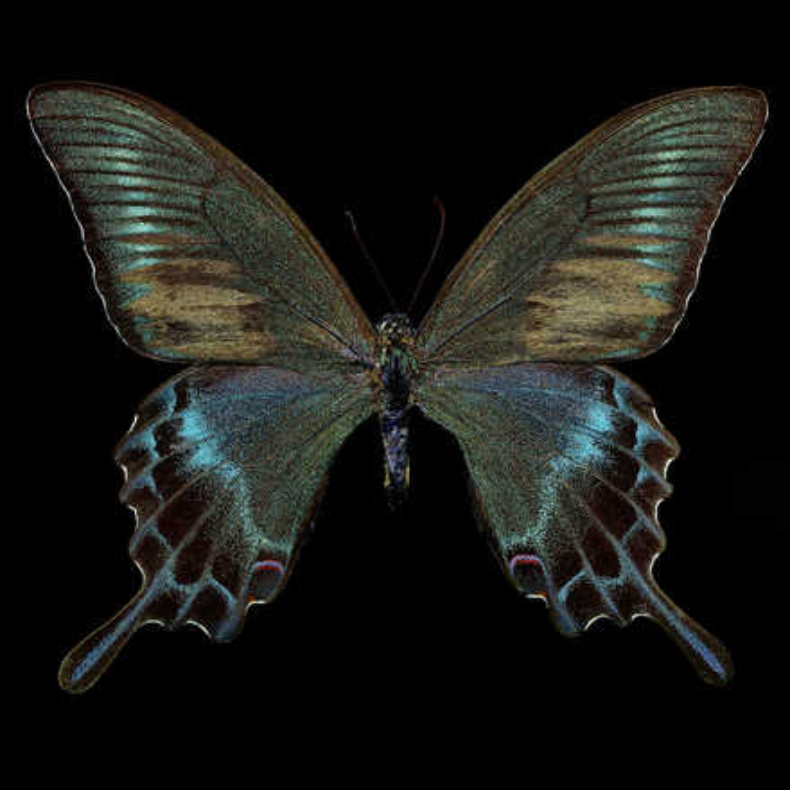 Butterfly  - Heiko Hellwig